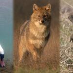 Ingyenesen nézhető díjnyertes magyar természetfilmek